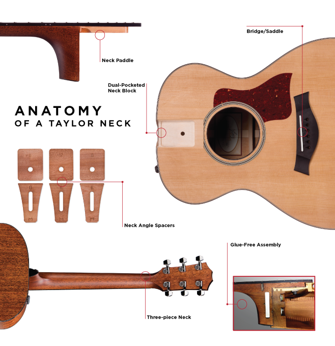 Taylor Acoustic Guitar Neck Anatomy